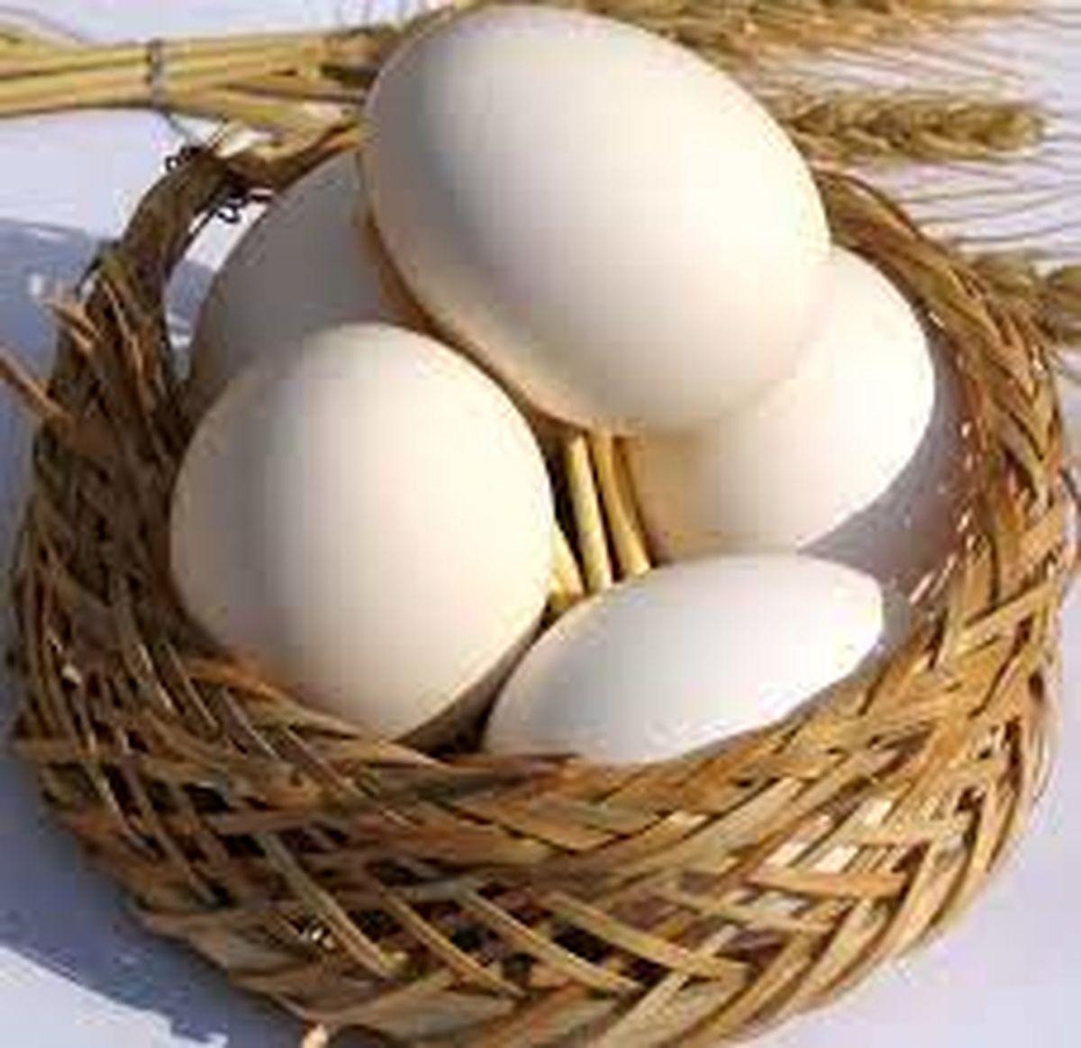 ۱۰ هزار تن تخم مرغ در روزهای آینده به کشور وارد میشود